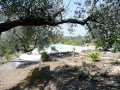 View of swimming pool from trees - Trullo Origano