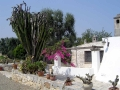 Villa Cornucopia - rental near Ostuni - outside view